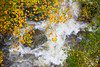 Rushing waterfalls with Fall foliage in heavy rain~Franconia, New Hampshire