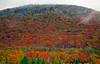 Mountain of color in rain & fog~Franconia, New Hampshire