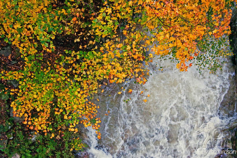 Roaring Stream in torrential downpour  with brilliant leaves in Franconia Notch State Park, NH