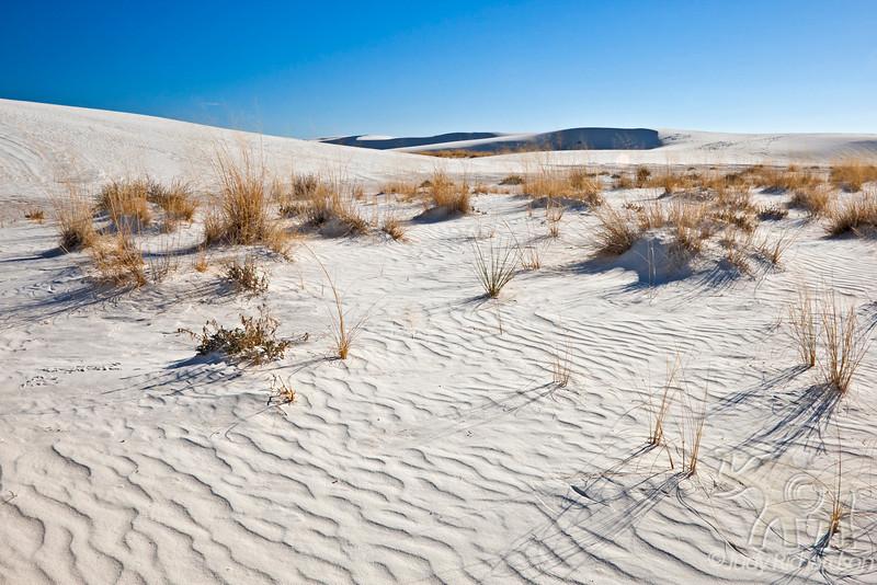 Desert Landscape at White Sands National Monument