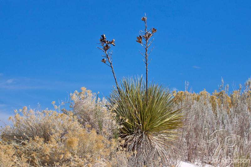 Yucca and Fall foliage at White Sands National Monument