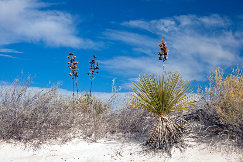 Yucca and Fall Foliage ~ White Sands National Monument