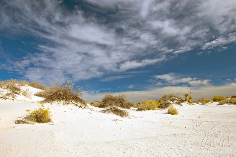 Desert Foliage ~ White Sands National Monument