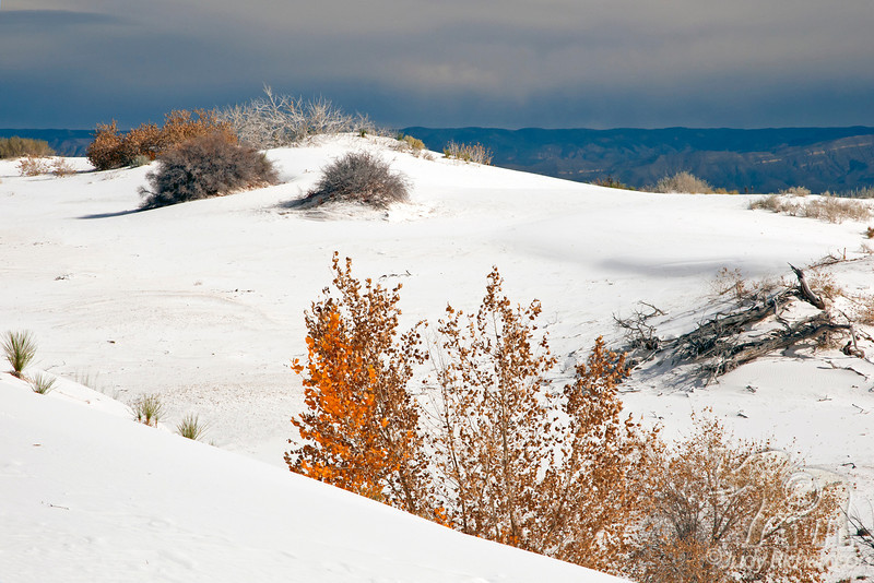 Contrasts ~ White Sands National Monument