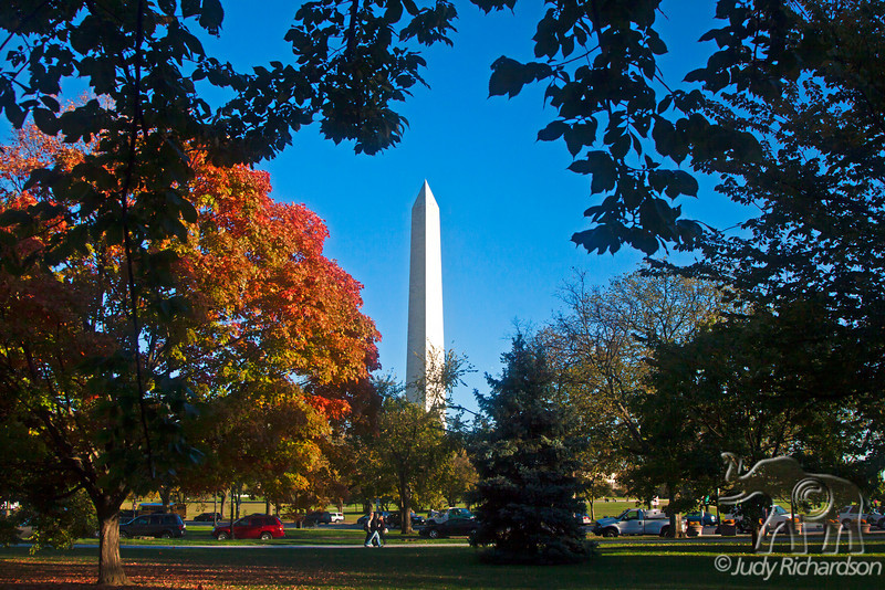 Washington Memorial framed by Fall trees