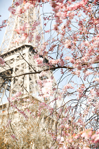 #EiffelBlossom