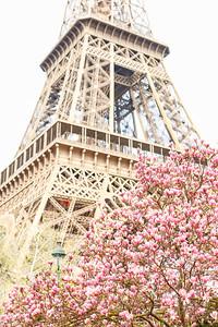 #EiffelMagnolia