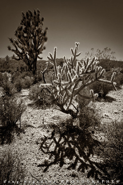 The Harsh Desert (#0125)