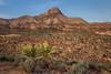 Desert View (#0391)