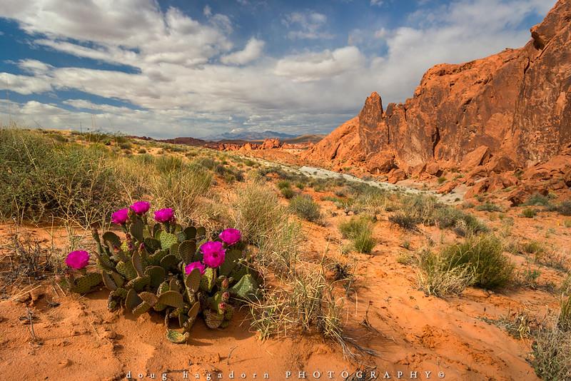 Cactus Flowers (#0503)