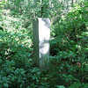 The Connecticut- New York state line marker.  It was a little bit of a challenge to follow the use trail from the road to this marker. The trail was very overgrown and hard to see.