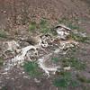 Leftovers! Dump site for several deer.