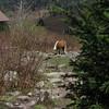 First pony sighting