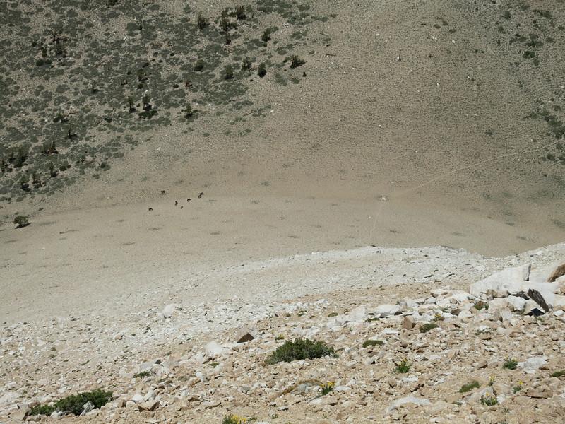 Wild mustangs at Trail Canyon Saddle.