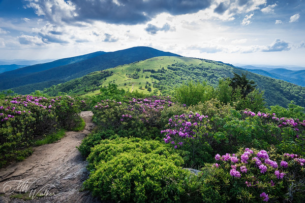 Roan Mountain State Park, TN