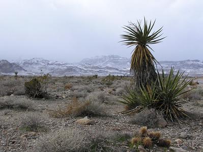 Snow near Las Vegas