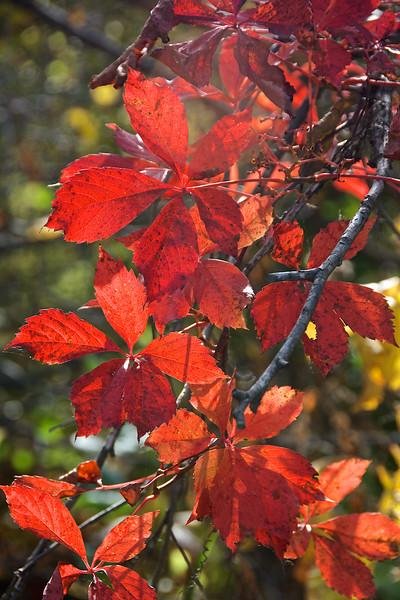 Back Light Leaves