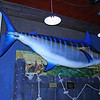 10 Atlantic Blue Marlin (712 lbs) mounted at Griff's Landing Restaurant in Frederick, Md