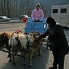 083 Ann and the miniature horses