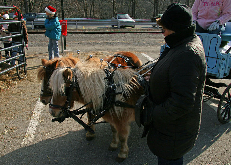 084 Ann and the miniature horses