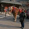 082 Ann and the beautiful Belgian Draft Horses