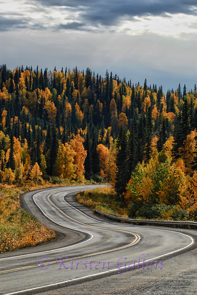 This is along Highway 3, taking us to Denali National Park.  We were very fortunate to be traveling when the trees were turning gold.