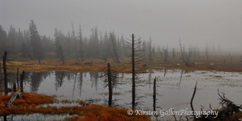 Very foggy scene along our ride on the train from Anchorage to Seward.