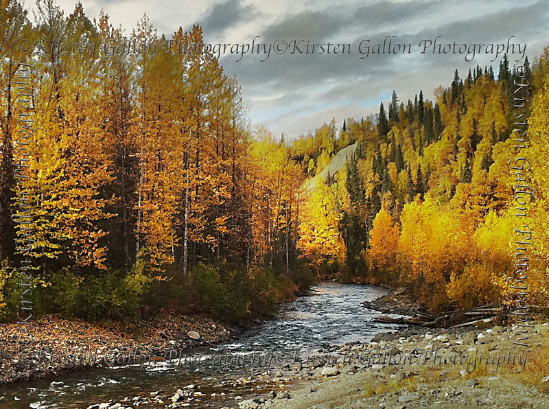 A creek we passed while driving along the highway upon our return to Anchorage after seeing Denali.  The colors of fall were amazing during our visit and I tried to capture as many shots as possible to convey the beauty.