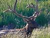 54a Yellowstone-9570