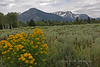 001 Yellowstone-8629