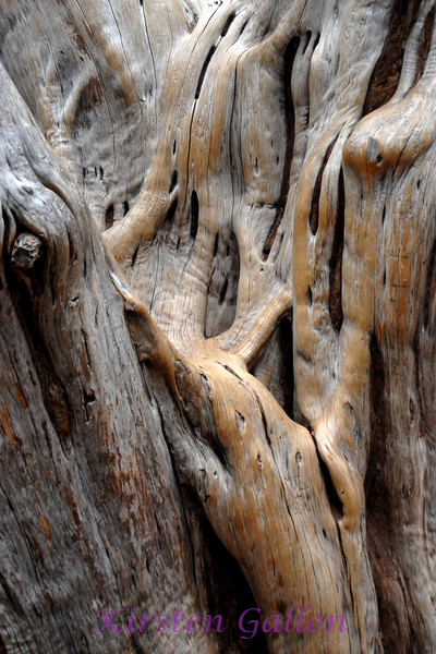 The interior of an old tree.