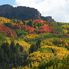 Aspens near Crested Butte