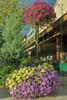 Montana_flowerpots_7050a1