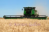 The combines used now are bigger, badder and computerized to give the farmer plenty of information to make the process more efficient.   Different sized headers up to 36 ft., to get the job done quicker.  Time is always a concern for the farmer.