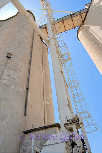 After draining out of the truck into the holding area below the truck, the wheat is then transferred up and into the large storage elevators.
