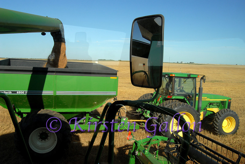 This time I am inside the cab of the combine.  This shows how the tractor and grain cart align with the combine so it can unload it's bin full of grain while continuing to cut at the same time.  Another bumpy ride while photographing.
