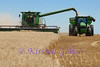 Once the bin on the combine fills to capacity, a tractor pulling a grain cart pulls up along the combine to allow the combine to empty it's load of grain.  The combine can continue to cut non-stop.  The tractor with the grain cart now takes the grain to the waiting semi's to unload.