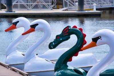 Swan and Dragon Boats