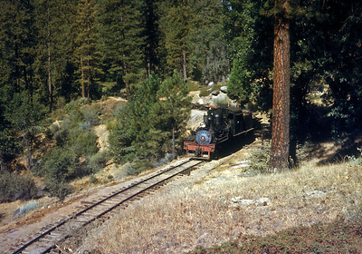 A train of empties snakes through the woods.  October 1960.