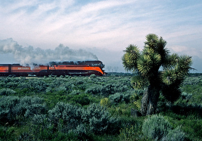 """April 1986.  After the filming of """"Tough Guys"""" in the LA Basin, 4449 and its train heads home to Portland via Cajon and Tehachapi passes. Here it is on the Palmdale cutoff, somewhere west of Victorville, passing some of the unusual """"joshua trees"""" that are native to the area."""
