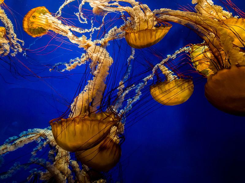 Jellyfish, Georgia Aquarium.
