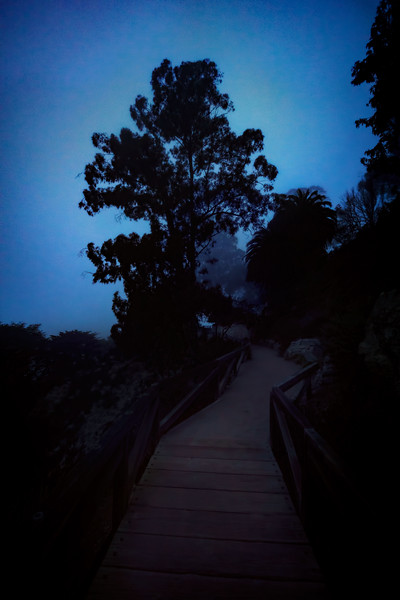 McWay-Falls-night-path