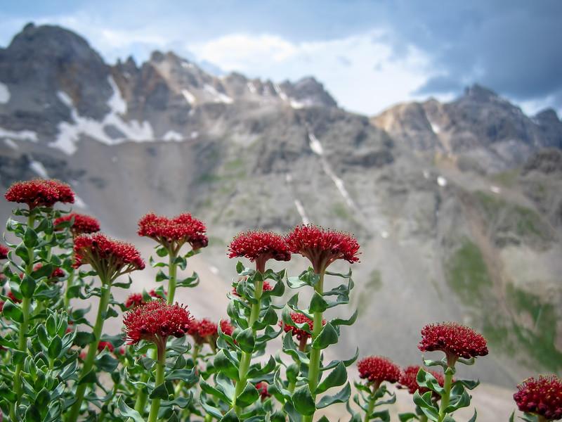 Valley Floor Wildflowers