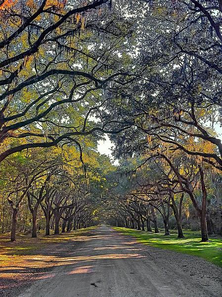 Savannah Lane