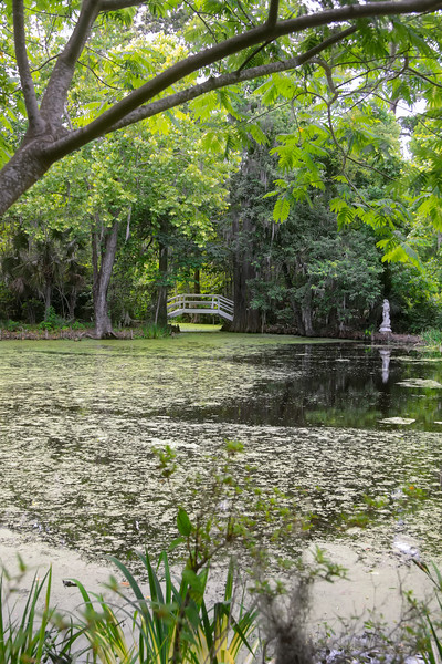 Magnolia Plantation Swamps
