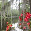 Magnolia Plantation #1855AF