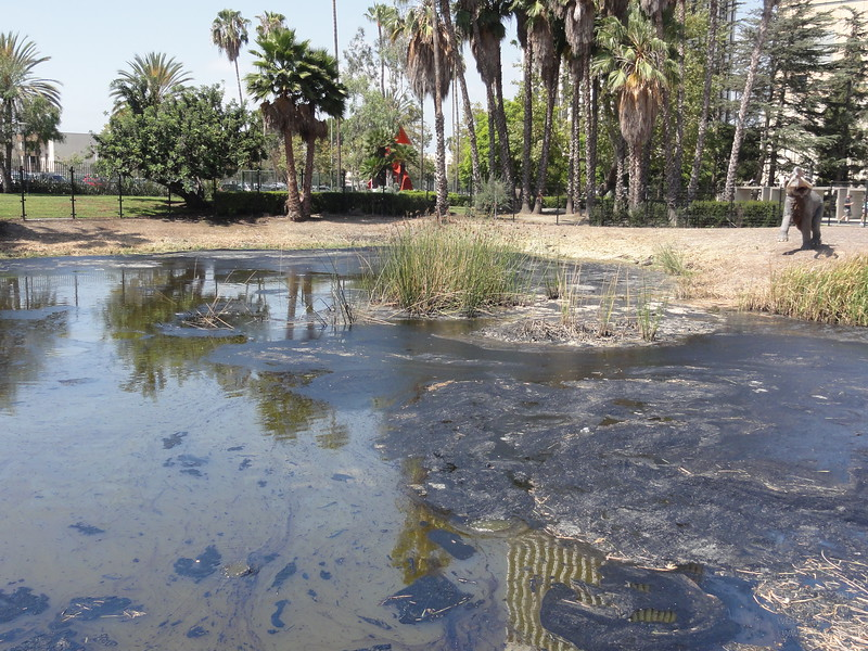La Brea Tar Pits, where the vibrant economy of Los Angeles began back in 1910 and supposedly favorite location for animals of the pleistocene