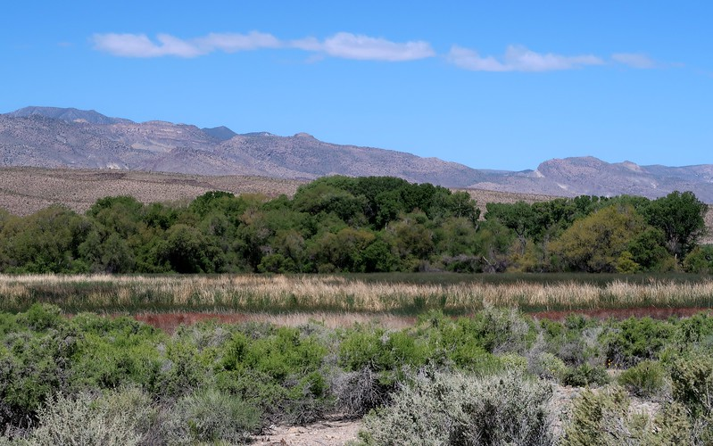 Pahranagat National Wildlife Refuge is a little oasis in the desert