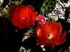 AZ-Superior-Boyce Thompson Arboretum-2002-04-27-0010