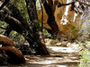 AZ-Superior-Boyce Thompson Arboretum-2002-04-27-0027